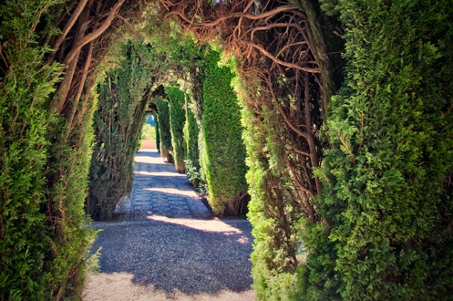 hedge-tunnel